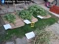 FOTO NAKA chytila pestovateľa marihuany z Bučian: Za TENTO arzenál mu hrozí 15 rokov väzenia
