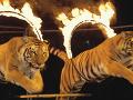 Ministerstvo rozhodlo: O pár dní sa skončí utrpenie zvierat v cirkusoch, Matečná neskrýva emócie