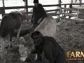 Mirka Csorbová a Matej Jurkovič boli skontrolovať kravy. To sa im, a najmä mladej farmárke, vypomstilo.