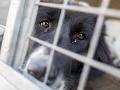 Tresty za týranie zvierat by sa mali sprísniť: Rozhodne o tom novela trestného zákona