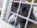 Tisíce ľudí vyšli protestovať do ulíc Hamburgu: Žiadali zastaviť pokusy na zvieratách