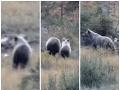 Medvedia rodinka v Javorovej