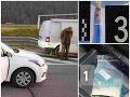 Hrozné, čo mladá dvojica spod Tatier ukrývala v aute: FOTO Na diaľnici ju za to zatkli policajti