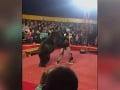 VIDEO Šialený útok v cirkuse: Rozbesnený medveď sa vrhol na trénera, ľudia utekali od hrôzy preč