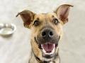 Sloboda zvierat žiada stiahnuť novelu o zákaze držania psov na reťazi: Nepáčia sa jej výnimky
