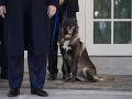 FOTO štvornohého bojovníka: Trump ocenil psa zraneného pri operácii voči vodcovi Daeš