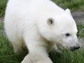 Veľká radosť v americkej zoo: Narodilo sa mláďa medveďa bieleho, čakajú ho kritické týždňe