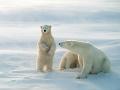 Chod dediny ochromila skupina viac ako 50 medveďov: Mimoriadne opatrenia, šelmy sú hladné!