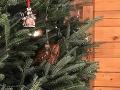 Bugár, Sulík a Hlina budú tráviť sviatky doma v rodinnom kruhu
