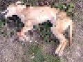 FOTO V Košiciach našli uhynutého psíka: Ľadová voda mala skryť mrazivé tajomstvo, chyba páchateľa
