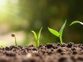 Nevšedné objavy roka 2019: Zázračné bobule a rastliny so superlepidlom