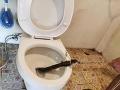 FOTO Ešte dobre, že si mladík nesadol na záchodovú misu! Pozrite sa, aké monštrum z nej vyliezlo