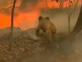Ohnivé peklo v Austrálii: VIDEO Päť najsilnejších okamihov, ktoré lámu srdcia