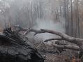 VIDEO Východ Austrálie sa teší z hustého dažďa: Zmiernil lesné požiare