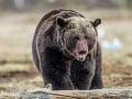 Dráma pri Prievidzi: Katarína so smrťou v očiach bežala ostošesť, blízko škôlky stretla medveďa