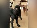VIDEO Zmutované kozľa šokovalo dedinčanov: Veď tá tvár... vyzerá ako človek!