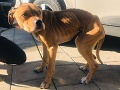 FOTO Najväčšie zlo je sám človek: Polícia objasňuje prípad týraného psa