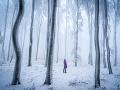 Zima v Malých Karpatoch