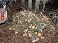 FOTO Novácki policajti prichytili muža pri krádeži dreva: Hrozí mu väzenie