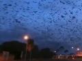 Mesto zamorilo netopierie tornádo: