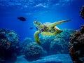 Vedci bijú na poplach! Hluk vytváraný ľuďmi ohrozuje podmorský život: Majú aj dobrú správu