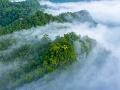 Desivé zistenie vedcov o Amazonskom dažďovom pralese: Do 15 rokov začne ohrozovať Zem!