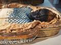 Archeológovia rozlúštili 2600 rokov starú záhadu múmie: Toto urobili mladej Egypťanke pred smrťou