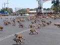 VIDEO KORONAVÍRUS vyhnal z obľúbenej destinácie turistov: Teraz ju terorizujú divoké opice!