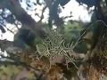 VIDEO záhadného živočícha zmiatlo