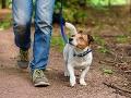 Expertka radí, ako sa v čase pandémie treba starať o domáce zvieratá: Tieto rady určite počúvajte!