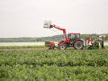 Slovenská zelenina sa vysádza