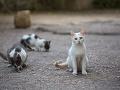 V Bratislave vykastrovali 1621 pouličných mačiek: Chce byť inšpiráciou pre ďalšie mestá