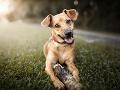 Psovi hrozí v rozhorúčenom aute prehriatie a dehydratácia, varuje nová kampaň polície