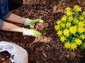 Na záhrade našla podivný predmet na FOTO: Keď kresťanka (61) zistila, čo to je, prepadla sa od hanby