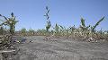 KORONAVÍRUS Slovenskí farmári bijú na poplach: Výzva vláde, môžeme prísť o úrodu!