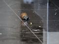 Ruská bezpečnostná služba prekazila teroristický útok: Polícia našla výbušniny, zbrane a strelivo