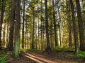 Pílenie stromov mohlo skončiť tragicky: Muža museli previezť do nemocnice