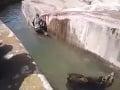 Šialené VIDEO z poľskej zoo: Mladík sa pobil s medveďom, zviera z toho utrpelo šok!