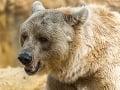FOTO V okolí Zvolena sa treba mať na pozore: Na obľúbenom mieste videli medveďa