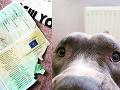 Majiteľovi narobil šarapatu, potom hodil psie oči: FOTO Šokovaný vodič nevedel, čo robiť!