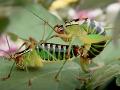 Sexujú slimáky aj kobylky: VIDEO Kontroverzná reklama hobby centra vyvolala vášne!