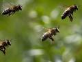 Muža z okolia Košíc poštípali včely: Ratovať ho museli až leteckí záchranári