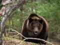Otec so synom mali na túre nečakaného spoločníka: Zaútočil na nich medveď