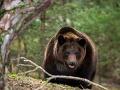 Muž (69) rybárčil, keď ho napadla medvedica! Desivé FOTO po útoku: Neuveríte, vďaka čomu prežil