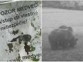 Slováci, majte sa na pozore: FOTO Vjednej lokalite sa pohybuje viac medveďov než inokedy!