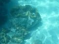 Neuveriteľný objav na dne mora v Austrálii: Má potenciál prepísať históriu!