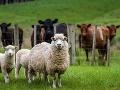 KORONAVÍRUS Farmu v Bavorsku uzavreli do karantény: COVID-19 má 174 pracovníkov