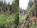 VIDEO Mladík venčil v lese psa, uprostred neho narazil na záhadu: Od strachu okamžite utiekol preč!