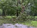 Maďarskom sa prehnala víchrica: V Győri vyvracala stromy, hasičov volali vyše 80-krát