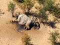 Afrikou otriasla záhadná smrť stoviek slonov: Experti už vedia, čo ich zrejme zabilo